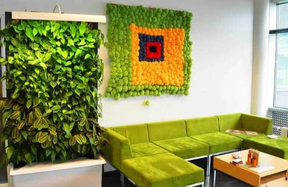 Как сделать зеленую стену из растений