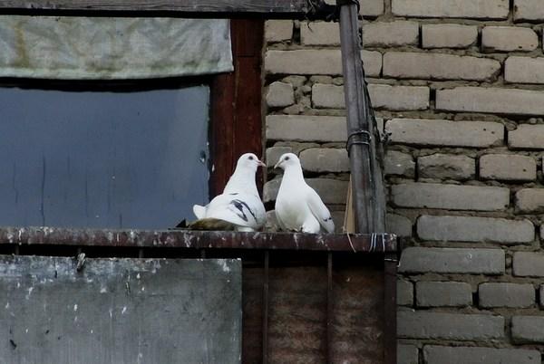 Чтобы голуби не садились на подоконник