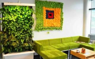 Зеленая стена из растений своими руками