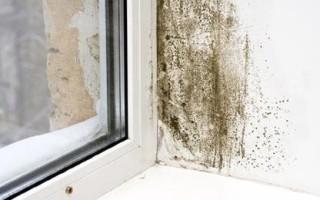 Почему сыреют стены в частном доме