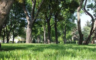 Какой сад находится в стенах московского кремля