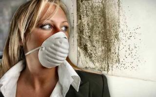 Как очистить стены от плесени домашними средствами